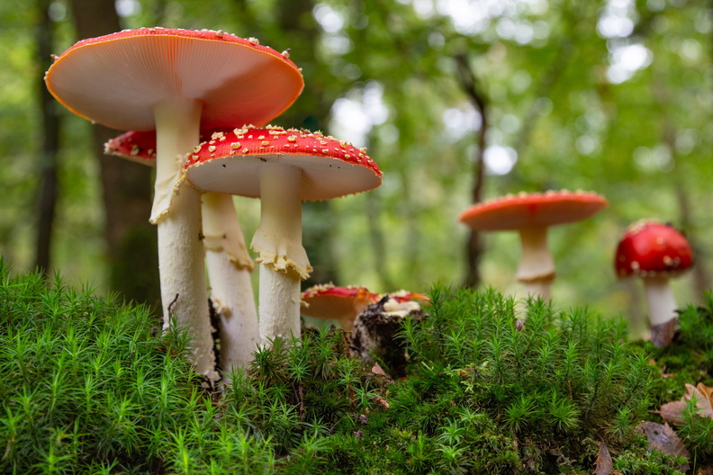 IMG_Mushrooms-2020-10-14-023.jpg
